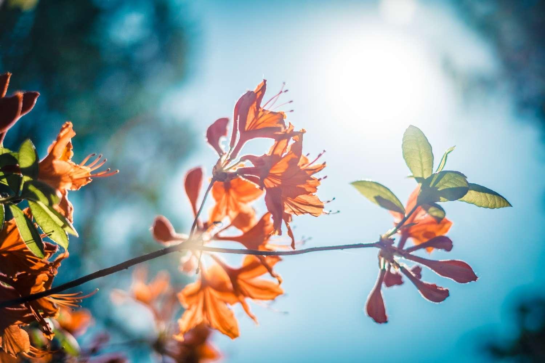 21 Mart İlkbahar Gündönümü'nde Neler Oluyor, Bizi Nasıl Etkiliyor?